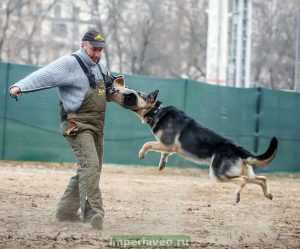фото Восточно-европейские собаки