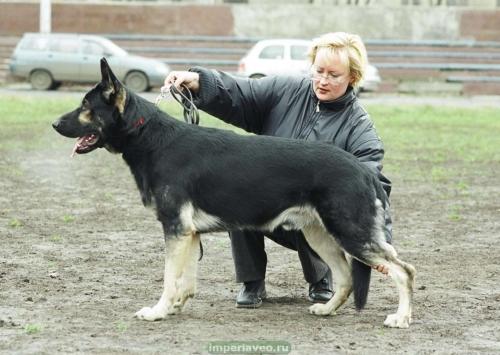 вео, кобель, восточноевропейская овчарка, питомник, Байкал